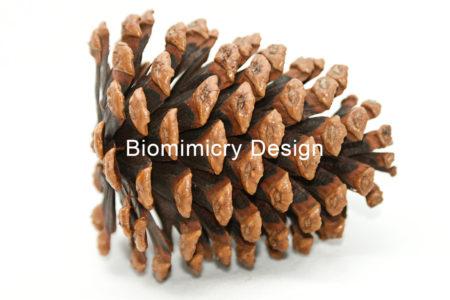 pine-cone-clipart-conifer-716987-551v311